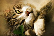 Soft Digital Art - Little Bitty Pretty Kitty by Christina Rollo