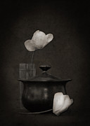Cyclamen Photos - Little Black Pot by Jim Larimer