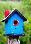 Bird House Prints - Little Blue Birdhouse Print by Karon Melillo DeVega