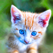 Domestic Cats Digital Art - Little Blue Eyes  - Orange Tabby Kitten by Mark E Tisdale