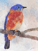 Little Bluebird Print by Joan A Hamilton