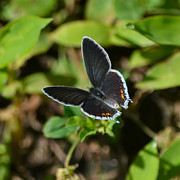 Mkz Photos - Little butterfly at my feet by Mary Zeman