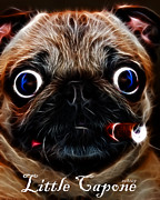 Pug Dogs Prints - Little Capone - c28169 - Electric Art - With Text Print by Wingsdomain Art and Photography