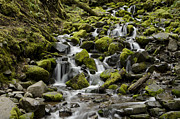 Hoh Photos - Little Cascades by Heather Applegate