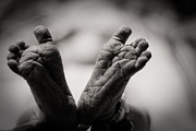 Black And White Photos Photos - Little Feet by Adam Romanowicz