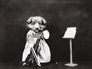 Little Fiddler Print by Aged Pixel