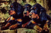 Gordon Setter Prints - Little Gordons In A Huddle  Print by Janice MacLellan