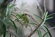 Lynn Jordan - Little Green Frog
