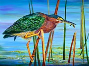 Greenback Framed Prints - Little Green Heron Framed Print by AnnaJo Vahle
