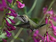 Saija  Lehtonen - Little Happy Wings