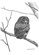 Renee Forth Fukumoto Drawings - Little Owl In The Forest by Renee Forth Fukumoto