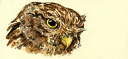 Original Owl Drawing Prints - Little Owl Print by Juan  Bosco