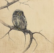 Pencil Sketch Mixed Media Prints - Little Owl Print by Lori  McNee