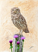 Iain S Byrne - Little Owl on Post