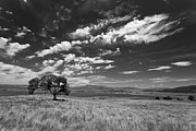 Big Sky Framed Prints - Little Prarie Big Sky - Black and White Framed Print by Peter Tellone
