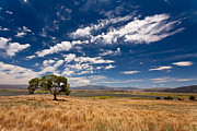 Beautiful Day Prints - Little Prarie - Big Sky Print by Peter Tellone