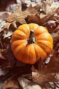 Sandra Cunningham - Little pumpkin in a bunch of leaves