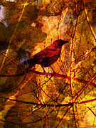 Little Bird Digital Art - Little Red Robin by Robert Ball