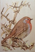 Friendly Pyrography - Little Robin by Manon  Massari