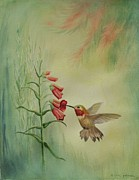 Gina Gahagan Metal Prints - Little Rufous Metal Print by Gina Gahagan