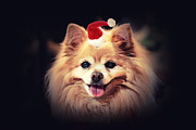 Santa Puppy Posters - Little Santa Poster by Charline Xia