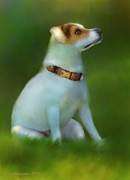 Jack Russell Digital Art - Little Senior by Kari Nanstad