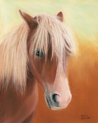Pet Portraits Art - Little Shetland Pony by Sharon Challand
