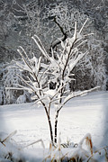 Snow-covered Landscape Digital Art Posters - Little Snow Tree Poster by Karen Adams