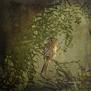 Karen Slagle - Little Sparrow