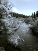Spokane Photo Prints - Little Spokane River Beauty Print by Daniel Hagerman