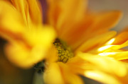 Floral Composition Photos - Little Sun by Jenny Rainbow