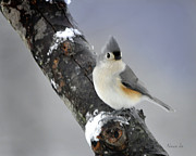 Nava Jo Thompson Prints - Little Titmouse Print by Nava Jo Thompson