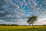 Davorin Mance Metal Prints - Little tree Metal Print by Davorin Mance