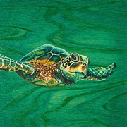 Hawaii Sea Turtle Paintings - Little Turtle by Emily Brantley