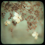 Gary Heller Art - Little White flowers - Floral - The little things in Life by Gary Heller by Gary Heller