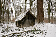 Winterly Forest Posters - Little wooden hood in the forest in winter Poster by Matthias Hauser