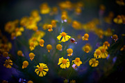 Flowers Originals - Little Yellows by Jeff Klingler