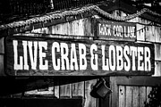 Lobster Sign Posters - Live Crab and Lobster Sign on Dory Fish Market Poster by Paul Velgos