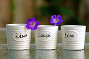 Judy Salcedo - Live Laugh Love