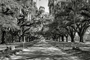 Framed Landscape Photograph Framed Prints - Live Oak Avenue II Framed Print by Steven Ainsworth