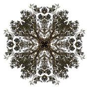 Live Oak Lace Print by Debra and Dave Vanderlaan