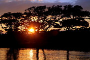 Oak Photos - Live Oak Silhouette by Karen Wiles