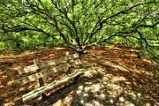 Dan Carmichael - Live Oak Tree and Bench Outer Banks