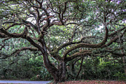 Green Cemetery Road Photos - Live Oak Tree by Scott Moore