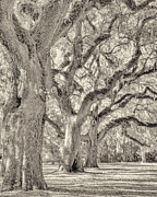 Bill LITTELL - Live Oaks-1