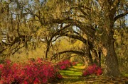 JHR  Photo ART - Live Oaks