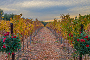 Vineyard Landscape Framed Prints - Livermore Vineyard Framed Print by Marc Crumpler