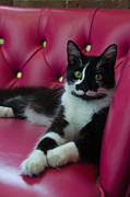 Cat Portraits Photo Prints - Living Art - Cat Photos Print by Laria Saunders