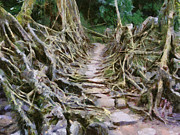 Tree Roots Paintings - Living bridge in northeast India by Georgi Dimitrov