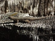 James Rishel Metal Prints - Lizard in thought Metal Print by James Rishel